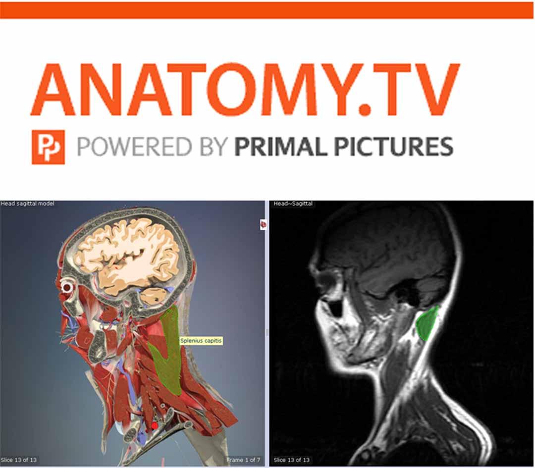 Imágenes de anatomía humana en 3D | Biblioteca del Hospital ...
