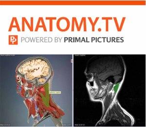 anatomyyy